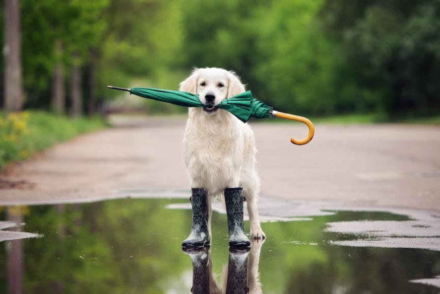Qué hacer con tu mascota en días de lluvia
