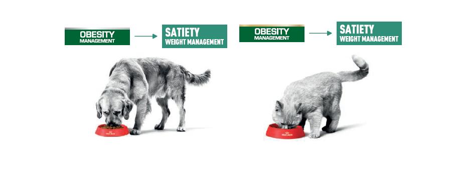 Guía de transición de los productos Obesity por Satiety de Royal Canin