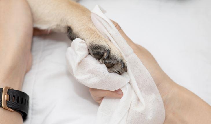 ¿Limpiáis las patas de vuestros perros antes de entrar en casa?