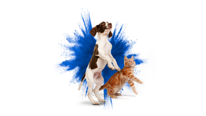 Frontline, la solución para proteger a tu mascota de las pulgas y garrapatas